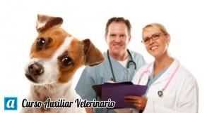 curso auxiliar veterinario