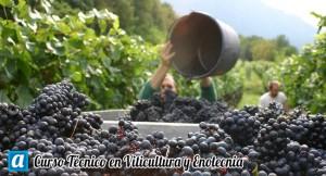Curso Técnico en Viticultura y Enotecnia